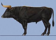 Lund-Augsburg aurochs (iamhammond) Tags: cattle bull ur urus typ uro aurochs bour auerochse oeros pratus oerrund bosprimigenius alkuhärkä urokse auroque áracs úras