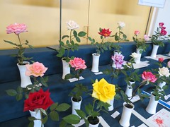 Miniature type roses on display