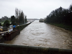 Swollen Dargle (turgidson) Tags: ireland 3 cold wet weather river lens four lumix prime flooding flood g bad picasa panasonic h micro swollen pancake 20mm asph dmc thirds flooded severe deluge inclement f17 m43 dargle primelens gh2 mirrorless lumixg picasa3 microfourthirds p1120333 20mmf17 20mmf17asph panasonic20mmf17asph panasonicgh2 panasoniclumixdmcgh2