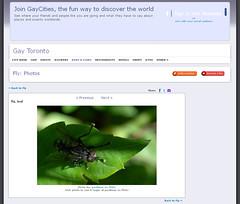 welcome to fly (postbear) Tags: toronto insect disco death fly image decay insects flies cclicense referrer refer robfordasshole destroycraigslist robfordisanasshole robfordandstephenharperaredisgustingbigots robfordisalyingsackofshit allconservativesarefilth likeallbulliesrobfordisachickenshitcoward robfordisafraidofeverything robfordisastupidbitch marywalshformayororprimeminister thenewmapfunctionisterrible robfordhasneonazisforfriends foundoutreadingisdifficult robfordisadisgustingfuckingthief thenewuploaderisalsoterrible helpourformermayorisastupidclown formermayorrobfordlikescottaging call911theformermayorsbeatinghiswifeagain richwhiteconservativesbuyjusticeyetagain robfordsexuallyassaultswomen welcometofly cclicensing