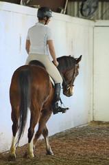 2013-04-07 HS (63) Miss Nicole (JLeeFleenor) Tags: horses caballo cheval photography photos uma cal horseshow cavallo cavalo pferd equestrian kuda alogo equine hest thoroughbreds soos hevonen cuddy paard cavall kon koin  hst ceffyl   ko faras hestur  perd  konj    capall beygir yarraman missnicole pfeerd