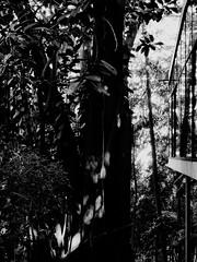 sem ttulo (Casa de Vidro) (TenerifeTenerife) Tags: arquitetura exterior modernismo pilotis linabobardi casadevidro tenerifetenerife danieljacobino