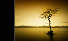 She's Back! (Samantha Nicol Art Photography) Tags: tree art water silhouette yellow bay scotland long exposure loch samantha scape toned lomond vignette nicol millarochy milarochy