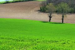 l'herbe tendre (LILI 296 ...) Tags: france spring champs terre arbre printemps herbe hautegaronne midipyrnes canoneos450d