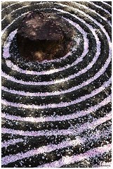 Fallen sakura petals on zen garden, Taizo-in temple, Kyoto (Damien Douxchamps) Tags: west japan temple petals kyoto zen  western  cherryblossom  sakura  myoshinji rockgarden kansai japon hanami zengarden  ukyo  kinki  taizoin    karesansui  myoushinji ukyou templecomplex     drylandscape  taizouin