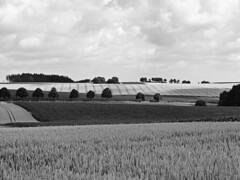 Dachauer Hinterland (2) (maxmedl) Tags: bayern bavaria dachau dachauer hinterland monochrome schwarzweiss sw bn bw landscape felder landwirtschaft getreidefeld weizen weizenfeld landschaft