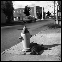 Dog Day Afternoon -  Paterson, NJ (2002) (Ebanator) Tags: paterson patersonnj dog hydrant fireplug firehydrant street streetphotography urban minoltaautocord ilfordhp5 twinlensreflex tlr