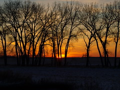 Winter Sunrise Behind Tall Trees (DebiNelson2016) Tags: nd2016contest newburg 11015 scenery debinelson minot