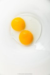 Two egg yolks in glass kitchen bowl. (annick vanderschelden) Tags: food egg chicken eggwhite eggyolk eggshell plate bowl white yellow glass female eaten albumen vitellus membranes protein choline ingredient cooking foodindustry edible chalazae collagen salmonellosis baking sweet savory emulsifier batch nutritional kcal caolries cholesterol fat cardiovascular speckled