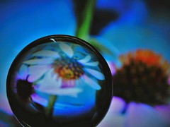in the crystal ball (Lana Pahl / Country Star Images) Tags: artisticandmanipulated artiswhatwemakeit catchycolors