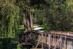 lets walk the sunny path! (Florian Grundstein) Tags: bruglengenfeld naab park wandern weg steg brcke oberpfalz bayern hiking upperpalatinate bume trees dreamy beautiful light sonne sommer sun summer nikon d7100 nikkor 24120 40