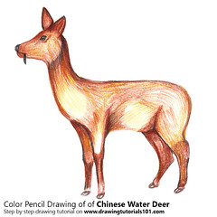 How to Draw a Chinese Water Deer with Color Pencils [Time Lapse] Chinese Water Deer is mostly found in Korea and China and is a small deer which is more similar to normal deer. If you want to draw Chinese Water Deer, follow our tutorial step by step for t (drawingtutorials101.com) Tags: water deer deers chinese animals wild sketch sketches sketching pencil drawings color drawing coloring how draw timelapse video