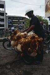 Bali, Denpasar, Market, poor chicken life (blauepics) Tags: indonesien indonesia indonesian indonesische bali island denpasar city stadt animals tiere mann man transport life leben chicken hhner meat fleisch suffering leiden