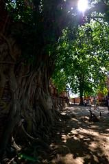 150501_DSC_1973-1 (mamaligamania) Tags: changwatphranakhonsiayuttha changwatphranakhonsiayutthaya th ayutthaya thailand budda