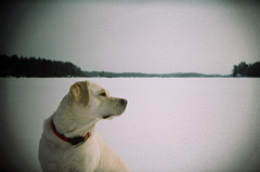 do they have cookies over there? (The Bexxx) Tags: family winter film 35mm fun holga lomography january deer february muskoka frozenlake 100iso gravenhurst 2013