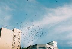 Pigeons (pascalbennett) Tags: life film 35mm southafrica flying pigeons fed2 zenit beachfront durban pietermaritzburg kzn
