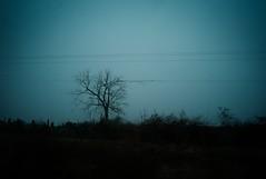 winter blues (Wacky Ballerina) Tags: leica usa northcarolina roadtrip bluehour elmarit elmarit21 leicam8