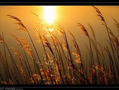 SOLEIL EN  HIVER (thierrymuller) Tags: sun france nature soleil camargue d90 nikonpassion oltusfotos elpadrepicture