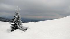 még tél az úr / still winter (debreczeniemoke) Tags: winter mountains tree hiking transylvania fa erdély tél túra hegyek rozsály canonpowershotsx20is igniş