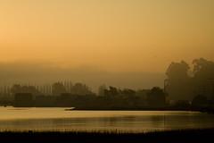 Edges against the light (Rongzoni) Tags: california sunrise sausalito