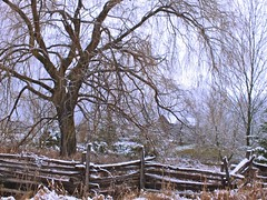 DSCF7868 (Andre Favron) Tags: winter snow ontario canada nature backyard seasons farmscapes logstructures treesflowersplants portfoliofavorites conceptualleadinglines toexporttofacebook toexporttoflickr boundariesfencesrailings