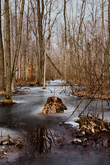 K7_14029 (Bob West) Tags: winter ontario ice k7 rondeauprovincialpark southwestontario bobwest pentax1224 carolinianforests