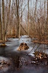 K7_14029 (Bob West) Tags: winter ontario ice k7 rondeauprovincialpark southwestontario bobwest pentax1224 carolinianforests