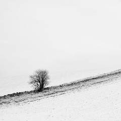 (Andrew Lockie) Tags: winter bw snow tree stone wall season mono hill dry cotswolds lone snowshill