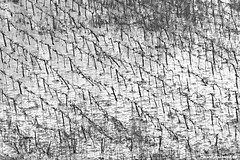 Pattern 3 (Vlachbild) Tags: plants snow weather germany blackwhite europe vine daily environment trier pfalzel rhinelandpalatinate dailypost minoltaaf20028apo sonyslta65