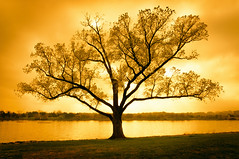 Enduring Gold (Sky Noir) Tags: sunset usa tree silhouette river photography gold washingtondc dc potomac enduring dmv sculling