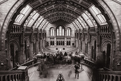 (llemonthyme) Tags: uk england london history museum architecture long exposure natural interior united kingdom vaulted naturalhistorymuseum nhm ceilings centralhall