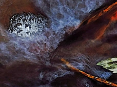 creekflow... (al-ien) Tags: abstraction myplace abstractreality mycreek