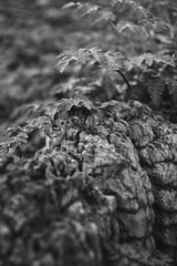 DSC_0728 (dan-morris) Tags: wood sunset white black tree green wet field grass forest photo leaf moss spring nikon shoot berries bokeh bark dew 1855mm dslr depth vr damp f3556g 1855mmf3556gvr d3100