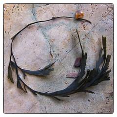 Seaweed necklace (nagillum) Tags: seaweed necklace shoreline rockpool nagillum