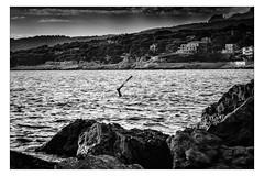 Prédateur (Gabi Monnier) Tags: sea bw mer france canon flickr hiver nb jour provence cassis palme calanques méditerranée hivers plongeur provencealpescôtedazur extérieur canoneos600d gabimonnier