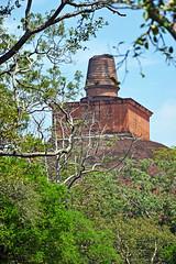 Top of Jethawana Stupa, Anuradhapura, Sri Lanka (sadat81) Tags: city ancient asia cities tropical tropic srilanka ceylon lankan southasia anuradhapura sinhalese anuradapura singalese