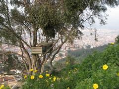 Ideas para un jardín planetario - Lola Orato
