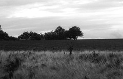 Scania By Train III (brandsvig) Tags: bw train landscape countryside skne sweden july sverige ricoh scania 2010 landet ystad tg pgatg cx1