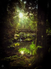 Somewhere That's Green (Augmented Reality Images (Getty Contributor)) Tags: australia bridge canon forest landscape leaves leefilters light longexposure nationalpark palms pool queensland rainforest rocks shadow sun sunshinecoast trees water