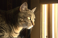 Smelling the Air (Bets<3 Fine Artist ~Picturing Light ~ Blessings ~~) Tags: maine cat mainecoon tiger longexposure indoors lighting tigercat whiskers eyes ears nose markings mainethewaylifeshouldbe