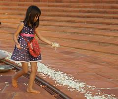 joy_at_work_5724 (Manohar_Auroville) Tags: sri aurobindo birthday auroville matrimandir urn amphitheatre decorations flowers beauty beauties girls manohar luigi fedele 15816