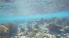 Nurse Shark 2 (MyFWCmedia) Tags: shark nurseshark underwater snorkel fwc myfwc myfwccom wildlife florida floridafishandwildlife conservation johnpennekamp keylargo flkeys floridakeys floridastateparks johnpennekampcoralreefstatepark park pennekamp lovefl
