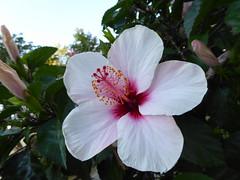 Im Park (thomaslion1208) Tags: blume blumen flower flowers fleur fleurs blomen pflanze natur flora weiss