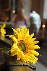 I vått och torrt ..... (Annica Spjuth) Tags: vatttorrt fs160904 fotosondag bröllop solros vigsel dennisåsteffi2016