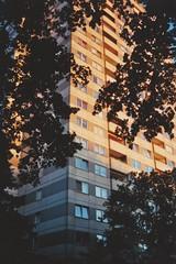(felixmm.) Tags: felix machleid film minolta analog analogue minoltax700 minolta700 35mm vintage berlin gropius gropiusstadt architecture beton sunset skyscraper plattenbau hip vice vicemag hipster summer nostalgia