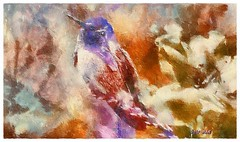 Costa's hummingbird - Calypte costae (Leo Bar) Tags: birds desert painting pixinmotion texture artwork art colors compositing leobar sonorandesert arizona artdigital awardtree netartii sharingart
