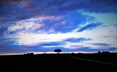 A path to the end of the world... (Galdur Vindur) Tags: sky horizon cielo nubes segovia torrecaballeros road sunset atardecer campo blue bluesky penumbra azul oscuridad countryside trees encinas arboles clouds gloom spain espaa twilight