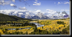 High above Oxbow Bend (Daryl L. Hunter - Hole Picture Photo Safaris) Tags: autumncolor daryllhunter fallcolors oxbowbend snakeriver amber goldencottonwood grandtetonnationalpark jacksonhole wyoming yellowaspen unitedstates usa