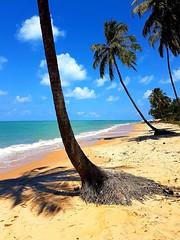 Sonho Verde (anthonydj08) Tags: praia beach cu sky oceano ocean coqueiro coconut alagoas brasil brazil s7 galaxys7