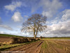 Stand Alone Ash - Cardeston (Daveyboy_75) Tags: tree shropshire olympus shrewsbury fields hdr singletree lonelytree rowton tractortracks lonesometree standalonetree e450 cardeston a485 a485welshpoolroad welshpoolroad
